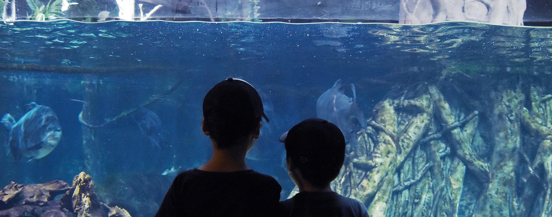 楽しみながら学べる、世界最大級の淡水魚水族館。