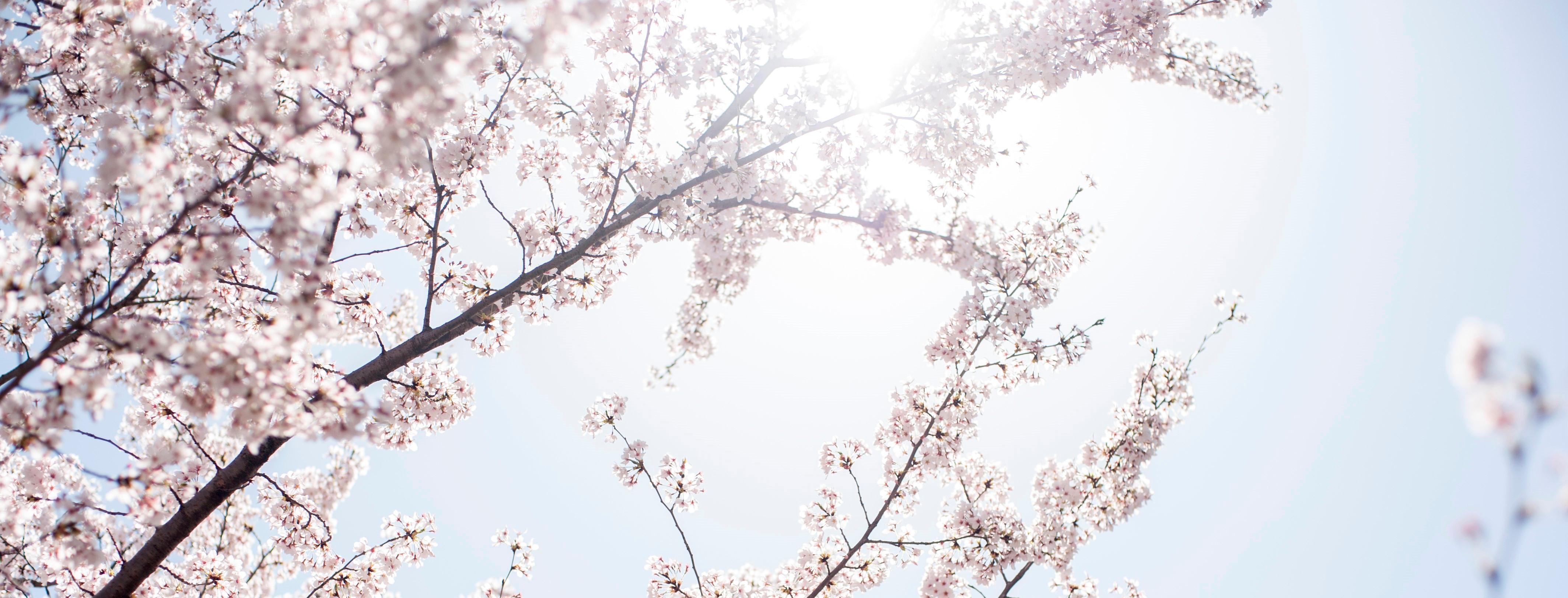 春の訪れと共に咲き渡る市民の誇り。